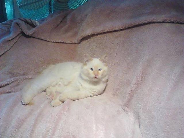 teddy on pink blanket